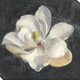 Vivid Floral 4: Magnolia