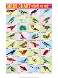 Indian Educational Chart - Birds