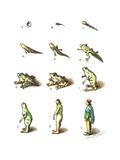 Evolution of a tadpole to a prince - Cartoon