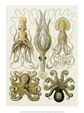 Art Forms of Nature, Gamochonia Reproduction d'art par Ernst Haeckel