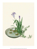 Ikebana  Arrangement of Purple Iris and White Lotus  1920
