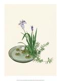 Ikebana  Arrangement of Purple Iris and White Lotus  1920