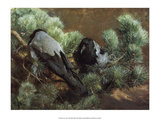 Crows  1891