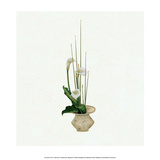 Ikebana  Arrangement of Calla Lilies