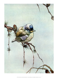 Bird Illustration  The Blue Tit