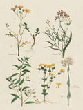 Fleurs Sauvages I