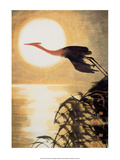 Stork Flying in Moonlight