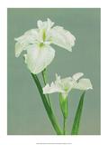 Iris  Vintage Japanese Photography