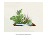Ikebana  Bamboo  Chrysanthemum  Plum & Orchid