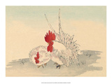 Japanese Chicken and Rooster