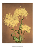 Yellow Chrysanthemums  Vintage Japanese Photography