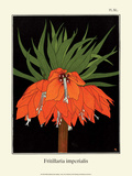 Botanical Print  Crown Imperial  1905