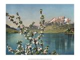 Lake des Quatre-Cantons  Switzerland  1949
