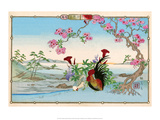 Chicken and Rooster under Cherry Blossom