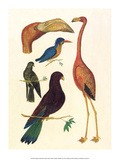 Flamingo  Pigeons  Doves & Kingfisher (1734-1765)