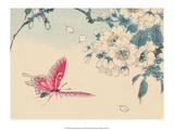 Japanese Pink Butterfly