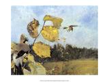Jays  1886