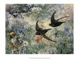 Swifts  1886