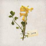 Gift Flower II