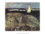 Gull at Nest  1913