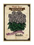 Vintage Begonia Seed Packet