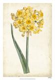 Curtis Narcissus I