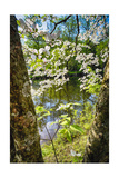 Canal Side Flowering Tree