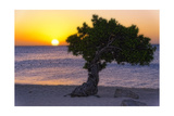Eagle Beach Sunset witha Divi Tree  Aruba