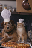 Dog and Cat Making Pizza