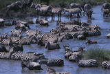 Zebras and Wildebeest at Water Hole
