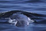 Blue Whale's Back