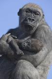 Gorilla Cradling Baby