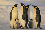 Emperor Penguins and Offspring