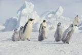 Emperor Penguins and Offspring