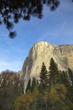 Majestic Sheer Rocky Wall of El Capitan  Yosemite National Park  California