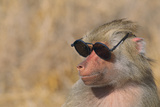 Baboon in Sunglasses