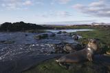 Sea Lion on Galapagos Islands