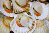 Scallops in a City Center Fish Market