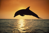 Dolphin Leaping from Water Papier Photo par DLILLC