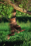 Chimp Swinging from Tree Branch