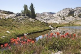 Usa  California  Yosemite National Park  General Views with Indian Paintbrush Flowers in Foreground