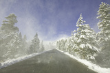 Mountain Highway among Snowy Trees in Inyo National Forest
