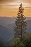Sierra Nevada Mountains with Ponderosa Pine