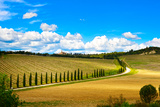 Tuscany  Vineyard  Cypress Trees and Road  Rural Landscape  Italy  Europe