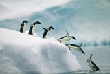 Penguins Jumping into Ocean