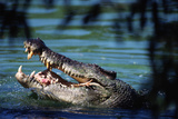Saltwater Crocodile  Crocodile Farm on Adelaide River