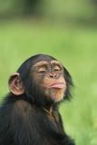 Chimpanzee Puckering