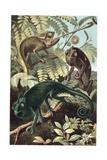 Chameleons or Chamaeleons by Alfred Edmund Brehm