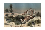 Desert Fox by Alfred Edmund Brehm
