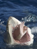Man Making Okay Sign from Shark's Mouth
